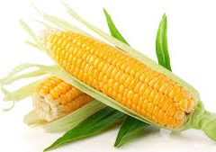 Top Maize Business Extraction Tips in Nigeria